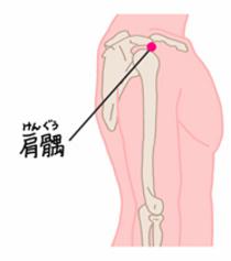 肩髃の位置